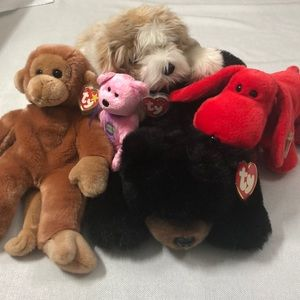 TY 5 beanie baby buddy plush lot with tags
